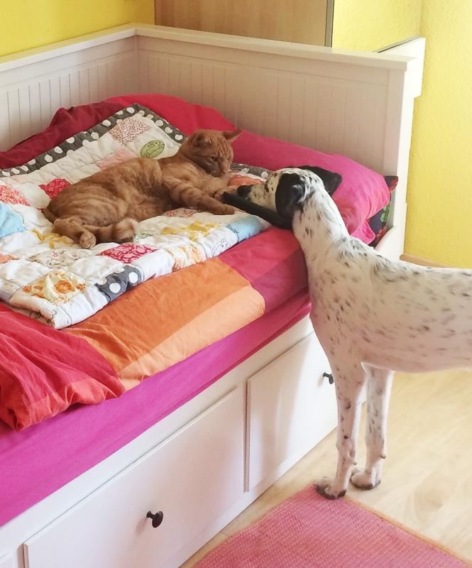 Hund und Kater, sich vorsichtig annähernd